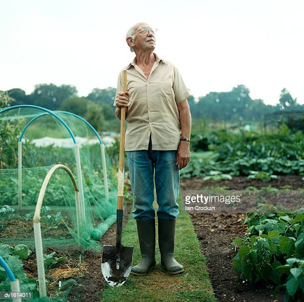 Senior Man Stands in a Vegetable Garden Holding a Shovel and Looking Up