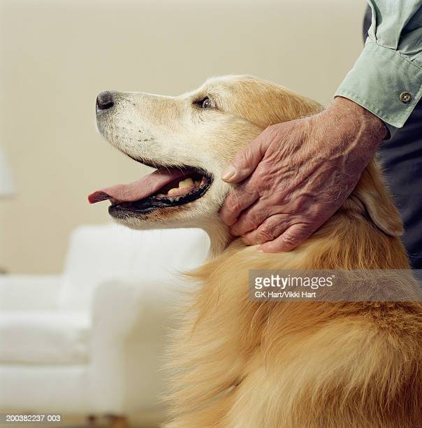 Senior man stroking golden retriever, close-up