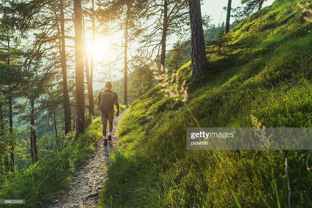 Senior man trail hiking in the forest at sunset : Stock Photo
