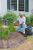 Senior man trimming seed pods from day lilies