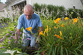 Senior man using a trowel in his flower garden