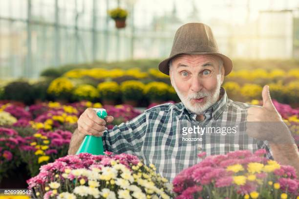 Senior man watering flowers and showing thums up at greenhouse