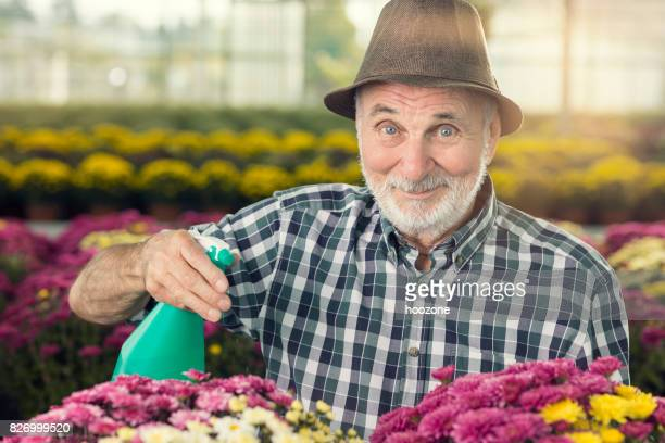 Senior man watering flowers at greenhouse