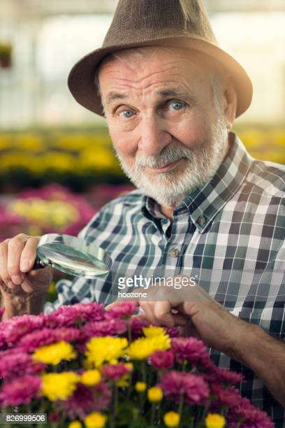 Senior man with magnifying glass looking flowers