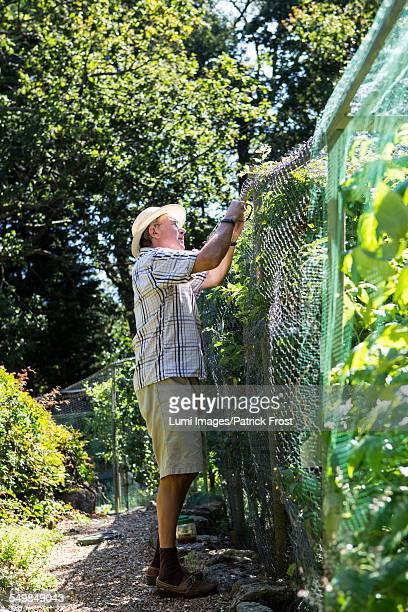 Senior Man Working in Garden, Bournemouth, County Dorset, UK, Europe