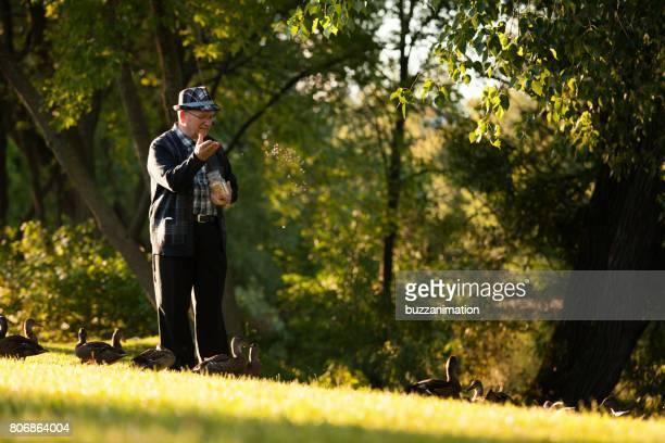 Senior mannen verzorgen van eenden