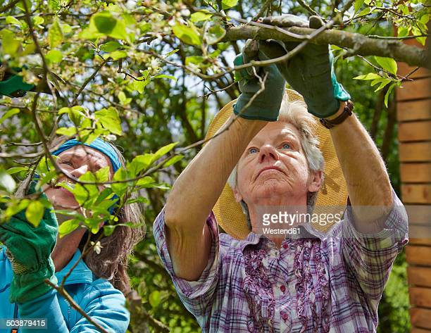 Senior mother and daughter pruning tree