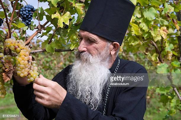 Senior Ortodox Priester während Trauben ernten, Europa