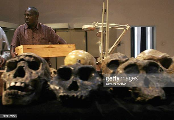Senior Palaeontologist at the National Museum of Kenya Frederick Kyalo Manthi carries 21 September 2007 the remains of a homo erectus discovered in...