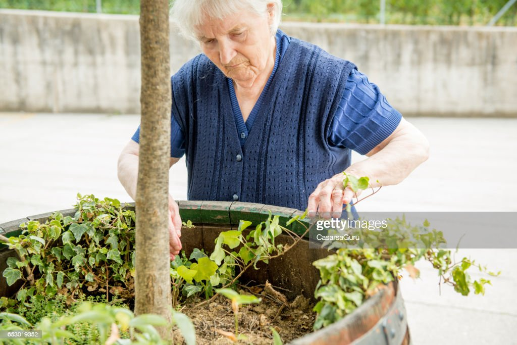 Senior Woman Gardening in The Retirement Home : Stock Photo