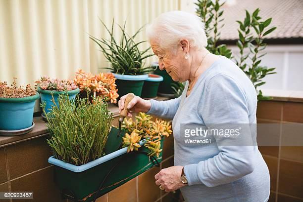 Senior woman gardening on her balcony