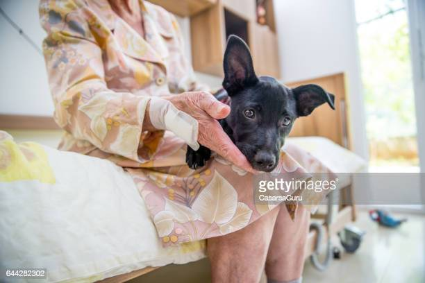 Senior Woman Having Pet Therapy In The Nursing Home