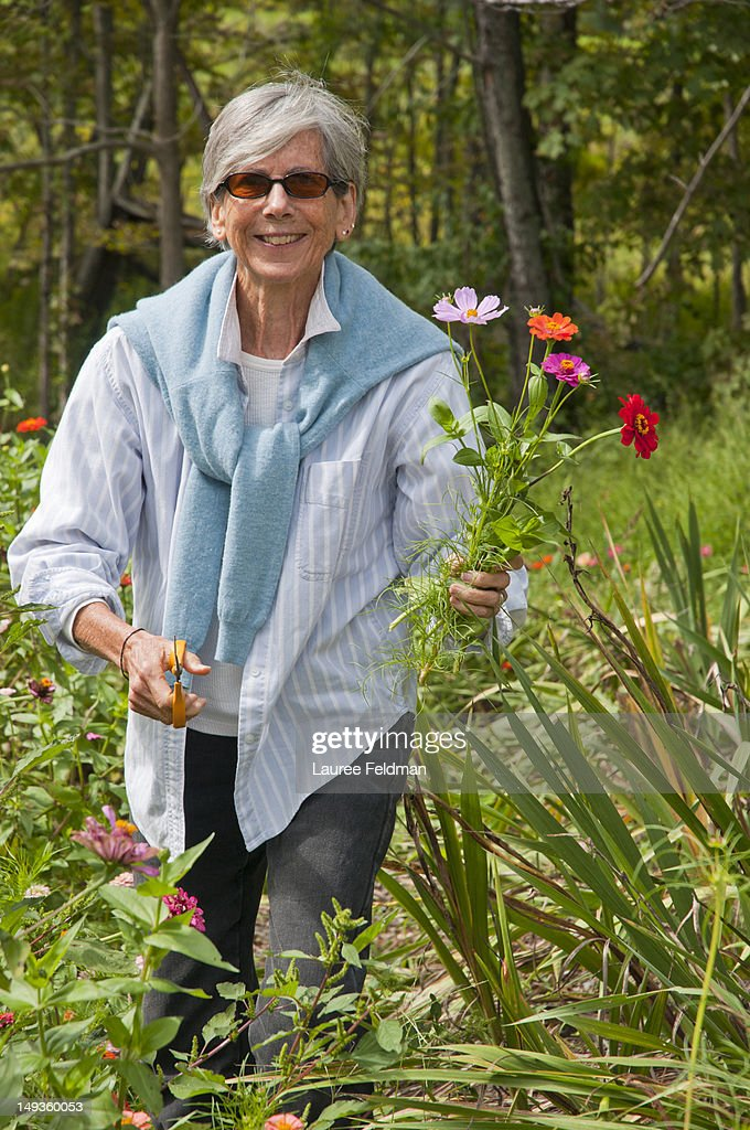 Senior woman in a field picking flowers : Stock Photo