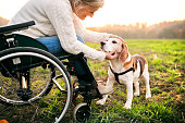 A senior woman in wheelchair with dog in autumn nature. Senior woman stroking a dog.