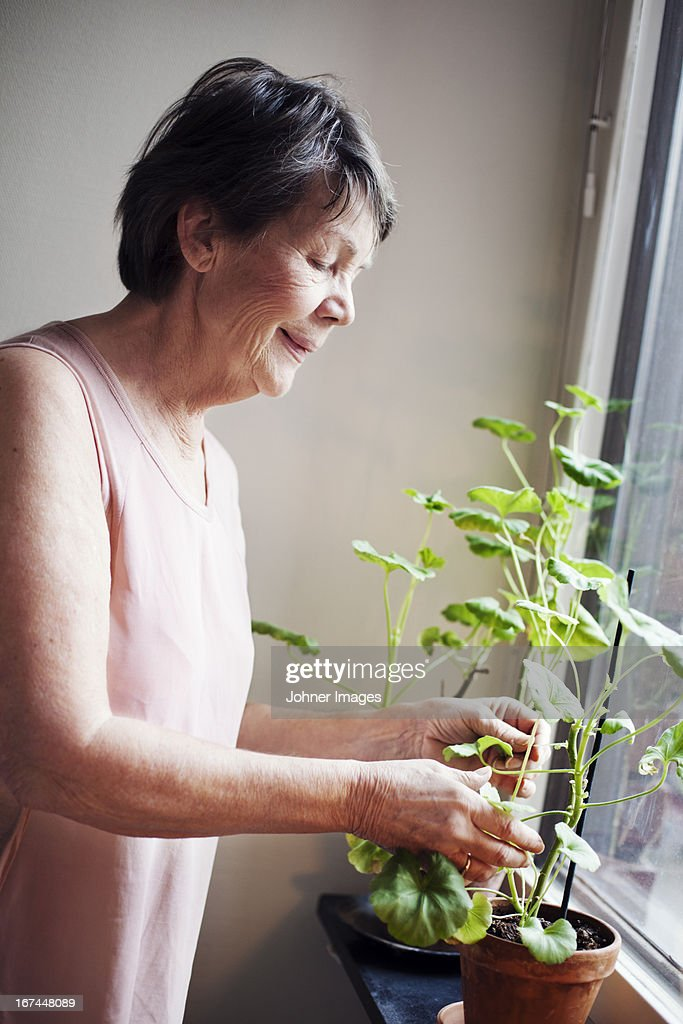 Senior woman looking at flowers : Stock Photo