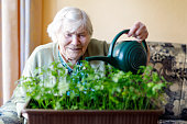 Active Senior woman of 90 years watering parsley plants with water can at home. Happy retired lady.