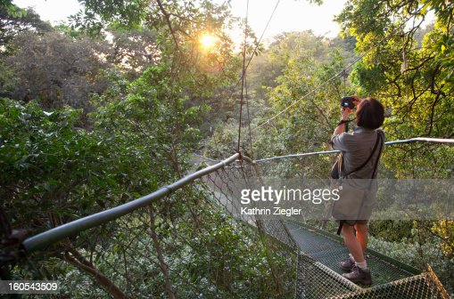 senior woman on a hanging bridge in the rainforest : Foto stock