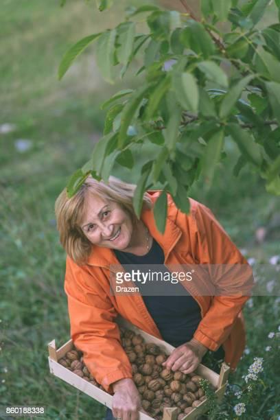 Haute femme ramasser des noix de Grenoble