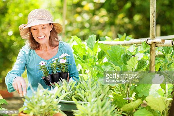 Senior Woman Planting Flowers In Garden