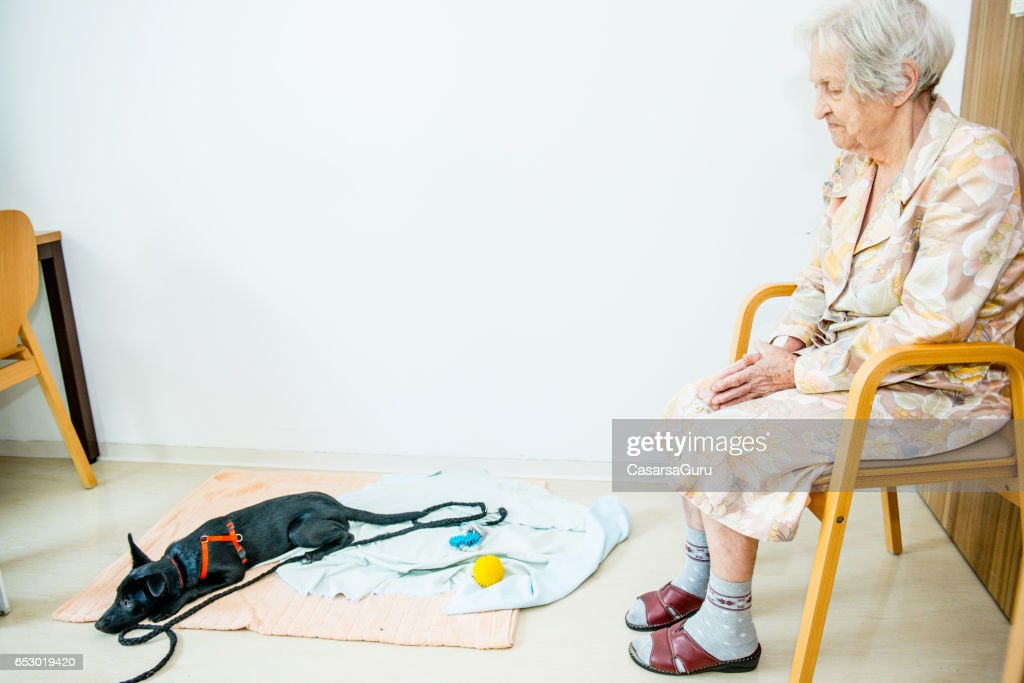 Senior Woman Playing With Her Dog In The Retirement Home : Stock Photo