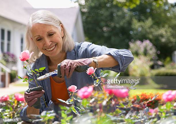 Senior woman trimming flowers
