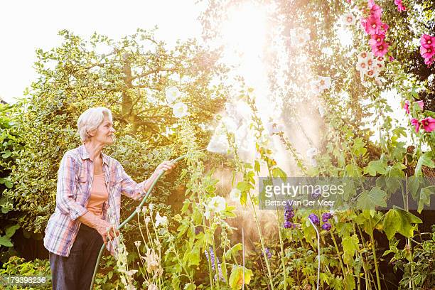 Senior woman watering flowers in garden.