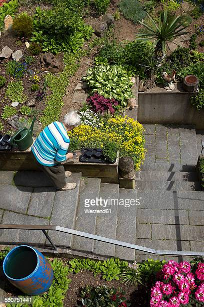 Senior woman working in the garden