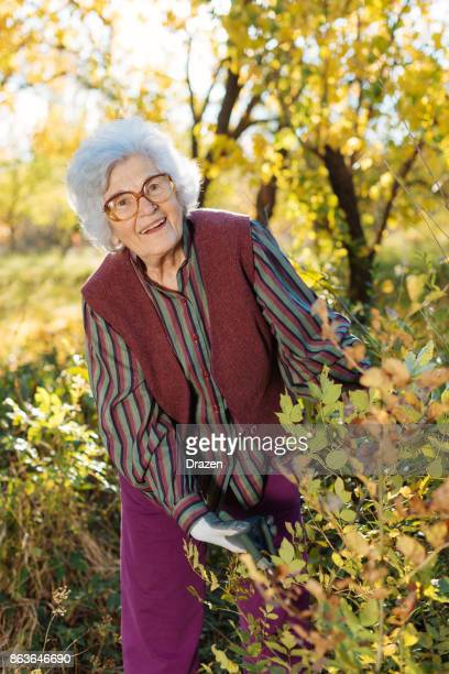 Senior woman working in the garden with plants and flowers