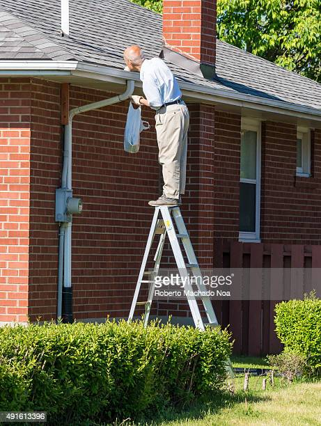 Seniors in Canada Senior man cleaning a rain gutter on a ladder Clearing autumn gutter blocked with leaves by hand