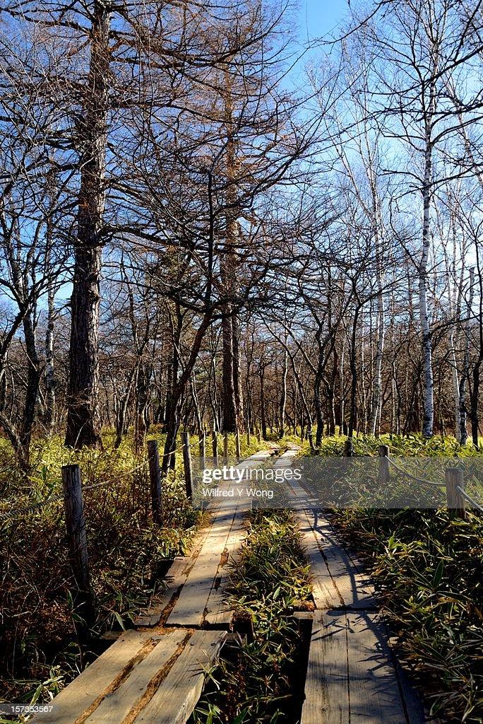 Senjogahara Plateau Nature Trail
