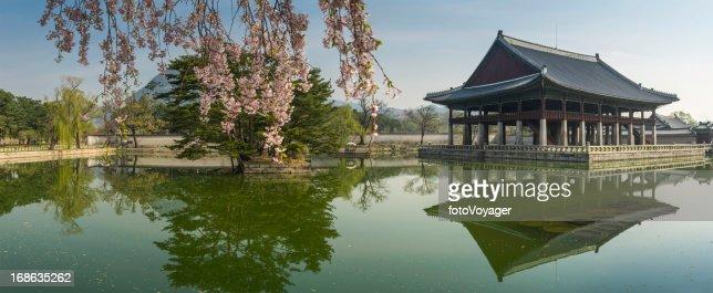 Seoul spring blossom over Gyeongbokgung pavillion reflecting lake panorama Korea