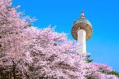 Seoul tower and pink cherry Blossom, Sakura season in spring,Seoul in South Korea.