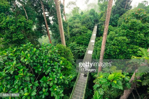 Sepilok Forest Reserve