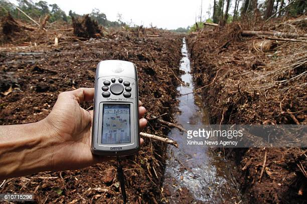 ACEH Sept 27 2016 An environmentalist measures ground acidity at the Rawa Singkil Wildlife Reserve one of the peat swamp in Aceh Indonesia Sept 27...