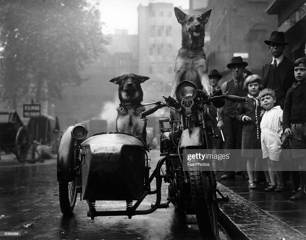 A bemused crowd stop to watch a pair of Alsatians driving a motorcycle and sidecar.