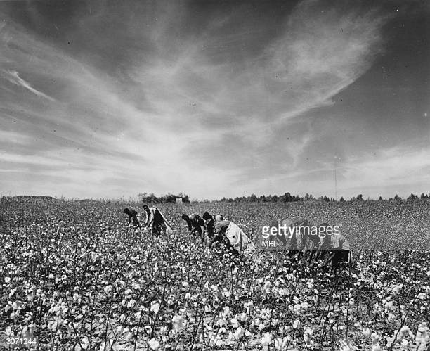 Sharecropper Stock Photos and Pictures   Getty Images