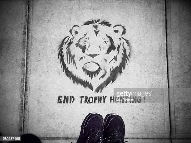 September 20 2015 In reaction to the recent killing of Cecil the Lion in Zimbabwe a stencil art protest sign appears on the sidewalk in Santa Barbara...