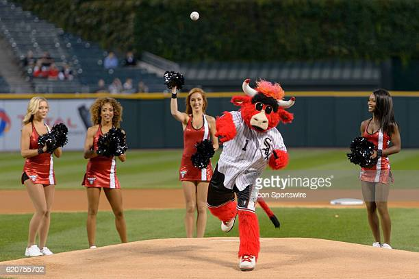 Chicago Bulls mascot Benny the Bull throws a ceremonial first pitch surrounded by Chicago Bulls cheerleaders Luvabulls before a game between the...