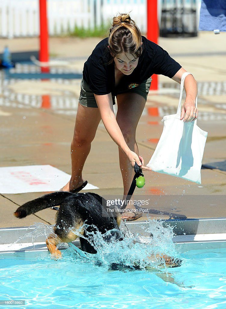 Brooke Cutler of DC shows her eight month old puppy dog, Big Helen, a little tough love by throwing her into the water during the fifth annual Doggie Day swim at Upshur Pool on Arkansas Avenue in Northwest Washington. Big Helen got over her initial fear and began to play at the event which allows dogs to swim in the pools before they are drained for the winter s sponsored by the D.C. Department of Parks and Recreation in partnership with the Department of Health and the Washington Humane Society on September 7, 2013 in Washington, DC