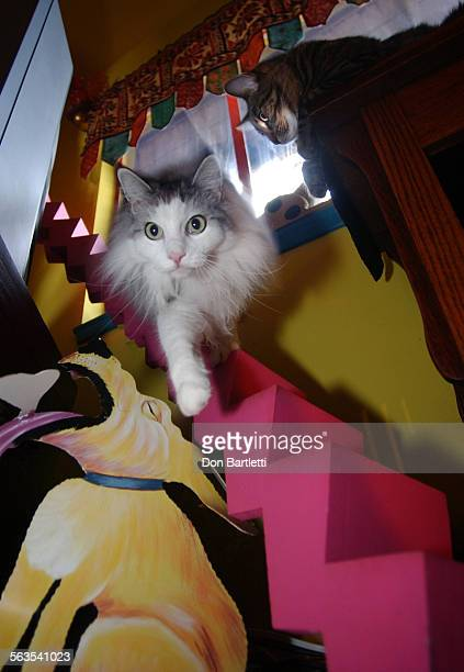 September 9 San Diego An elegant long hair cat descends the curving staircase that leads from the overhead catwalk in the home of Bob Walker and...