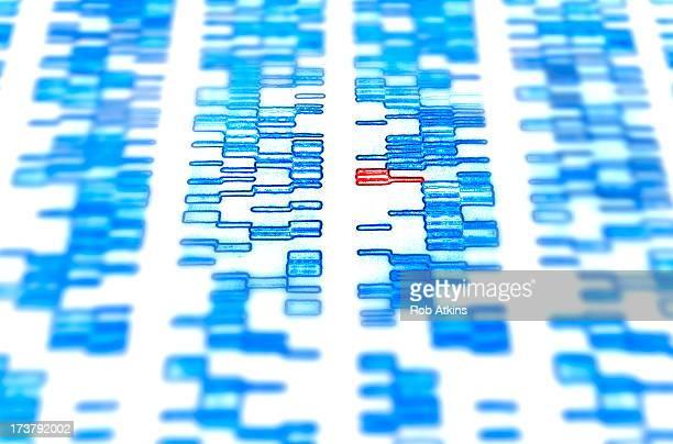 DNA sequence gel