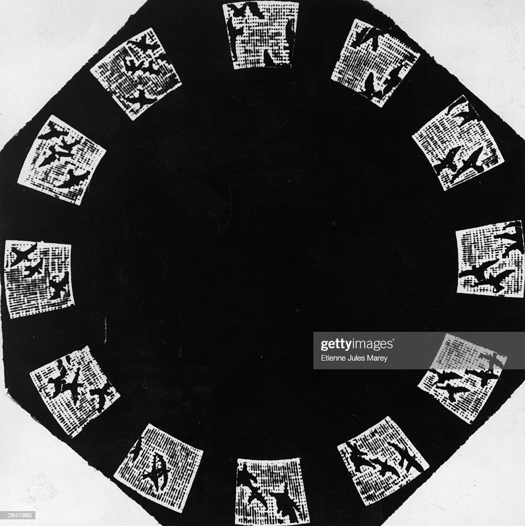 Sequence of Birds in flight taken by cinematographic pioneer Etienne Jules Marey's photographic gun