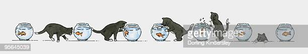 Sequence of illustrations showing black kitten and goldfish in bowl