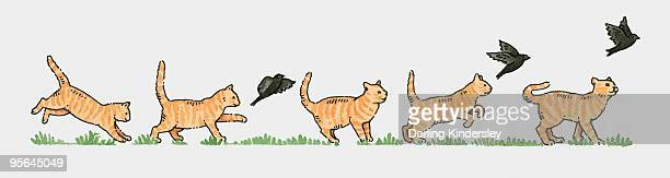 Sequence of illustrations showing ginger cat and blackbird