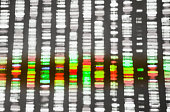 Color DNA sequence