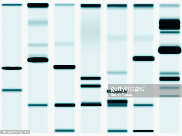 DNA Sequencing Gel, close-up (full frame)