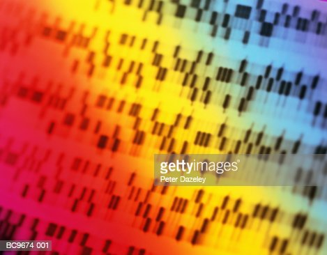DNA sequencing gel, full frame (brightly lit, blurred motion) : Stock Photo