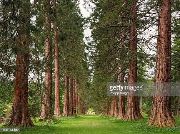 Sequoia Avenue