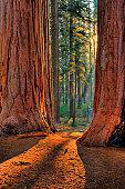 Sequoia Road - Grant Grove