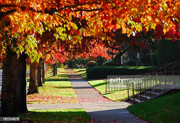 Serene Autumn Path